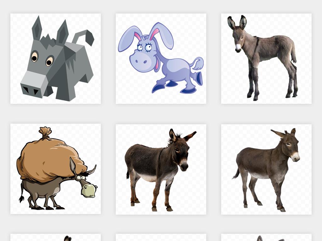 设计元素                                          动物世界