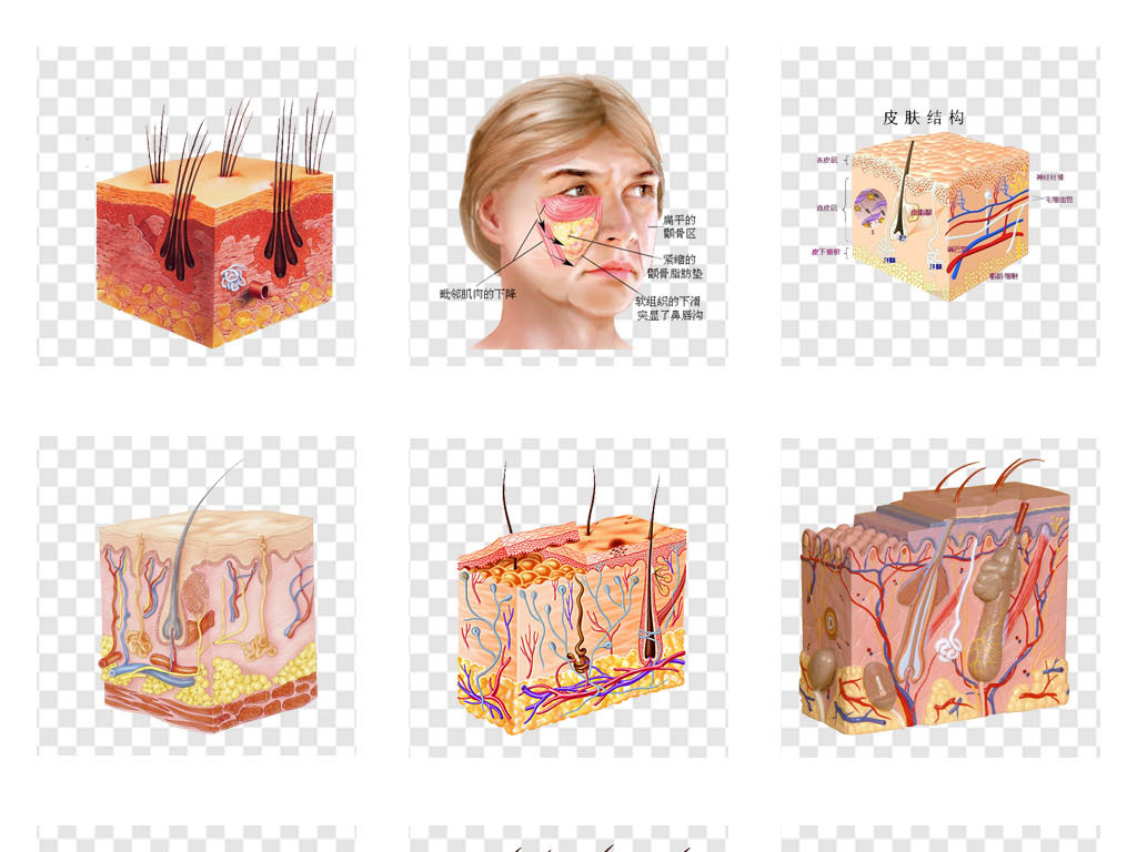 皮肤护理保养层细胞结构护肤品png素材