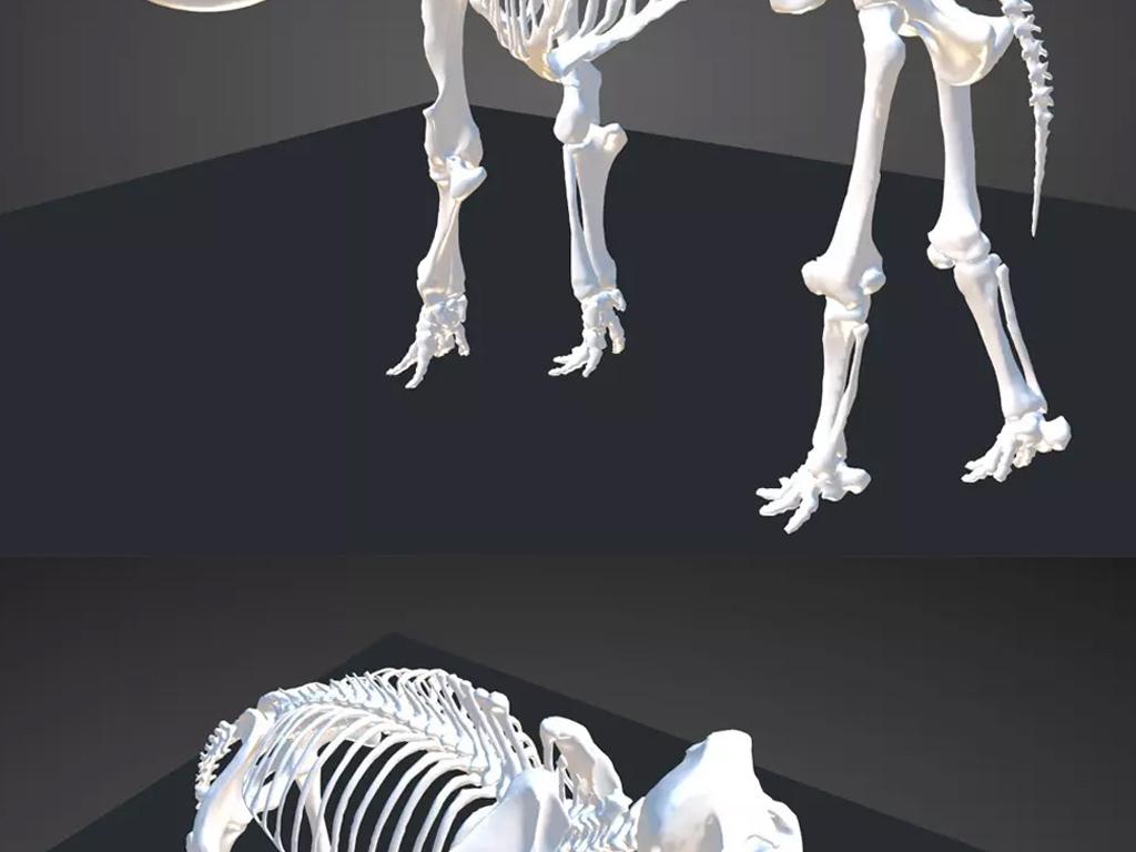 象大象狮子豹子骨头化石标本骷髅模型建模3d模型设计素材下载动物骨架
