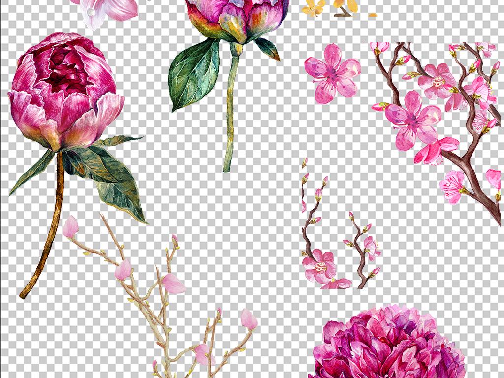 水彩花卉手绘月季玫瑰月季花瓣水墨玫瑰花png免扣素材