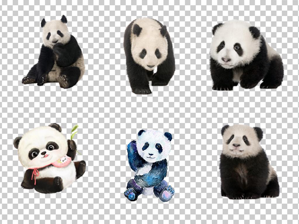 0873国宝熊猫可爱手绘熊猫卡通彩绘萌萌熊猫素材免抠