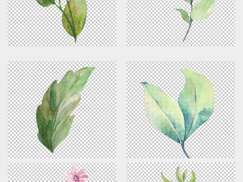 唯美小清新美式手绘插水彩花朵绿植免抠元素