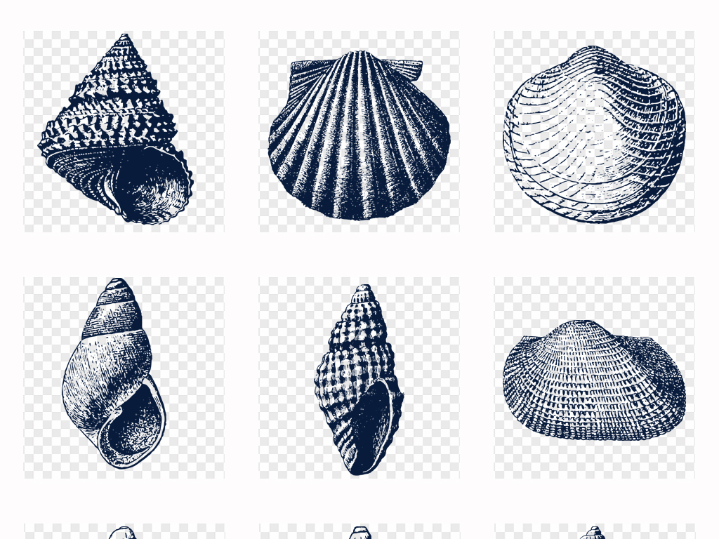 可爱卡通手绘海螺素描海螺贝壳海底世界png素材