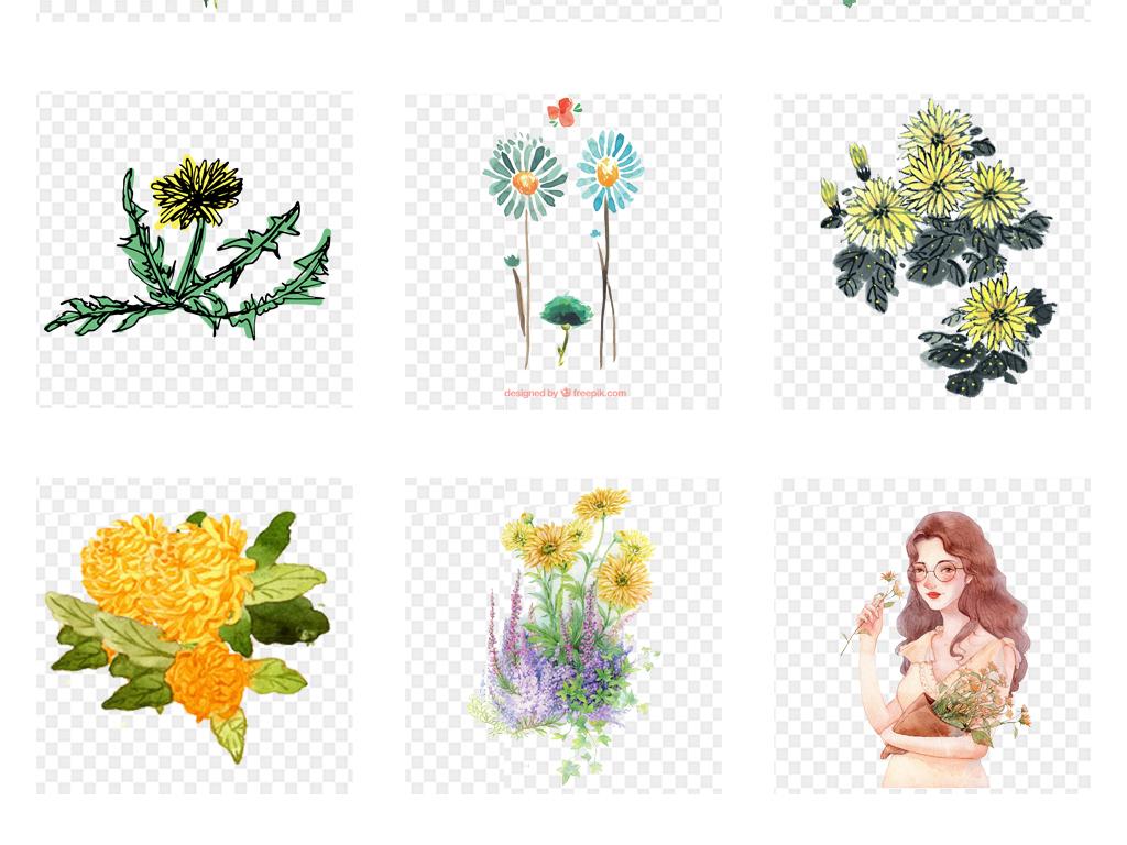 手绘水彩菊花花朵植物海报背景png素材