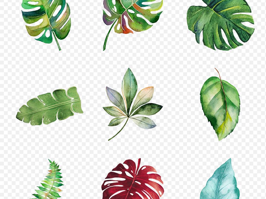 手绘叶子热绿色龟背竹芭蕉棕桐树雨林设计水彩热带植物芭蕉叶叶子植物