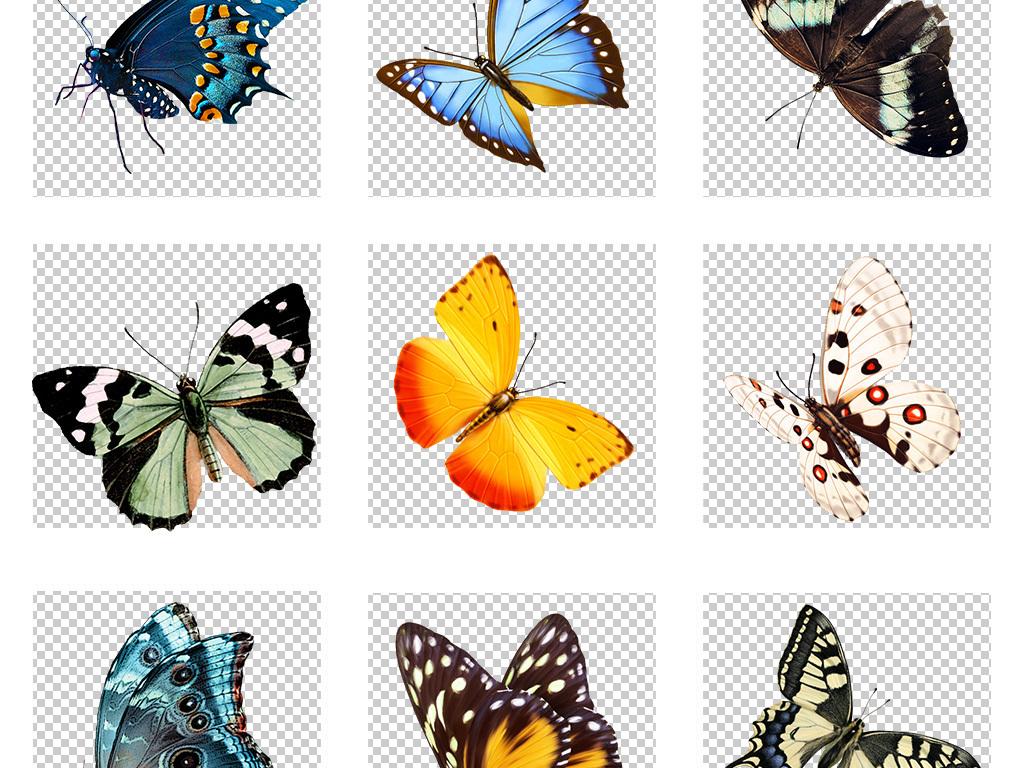 水墨蝴蝶彩色蝴蝶手绘蝴蝶设计素材