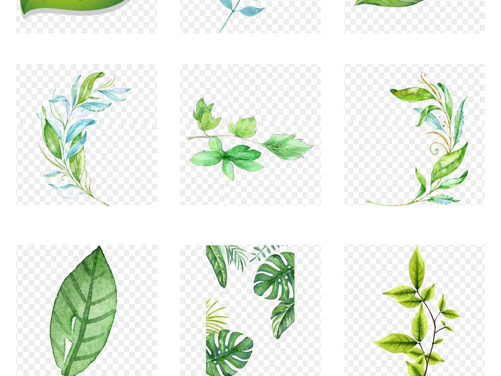 手绘水彩森系北欧热带雨林树叶绿植插画素材