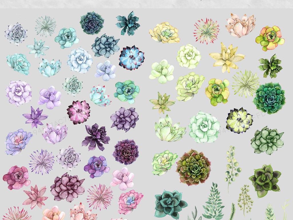 水彩手绘绿色紫色多肉植物png免抠素材