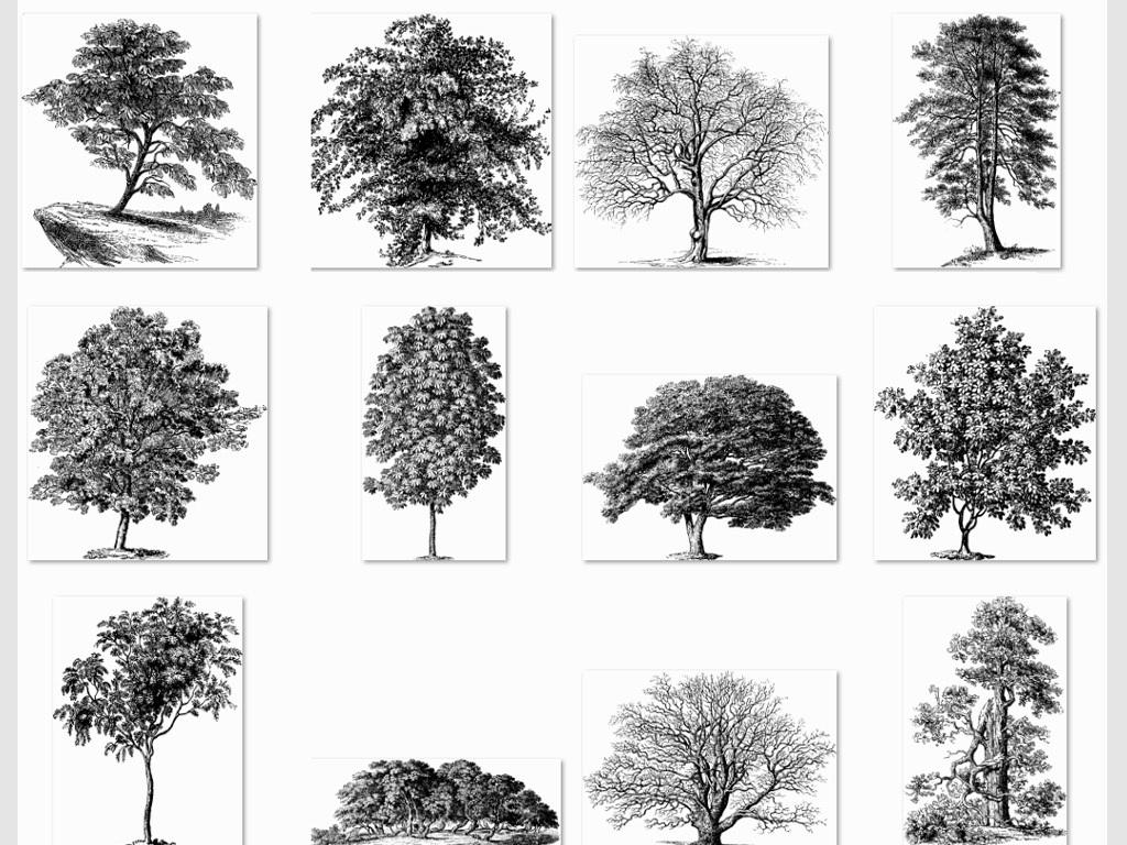 手绘树矢量图