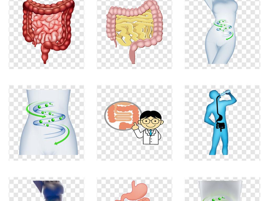 手绘肠道消化系统人体器官海报png素材