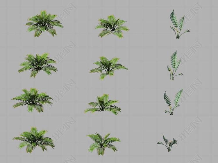 华山-植物-杂草