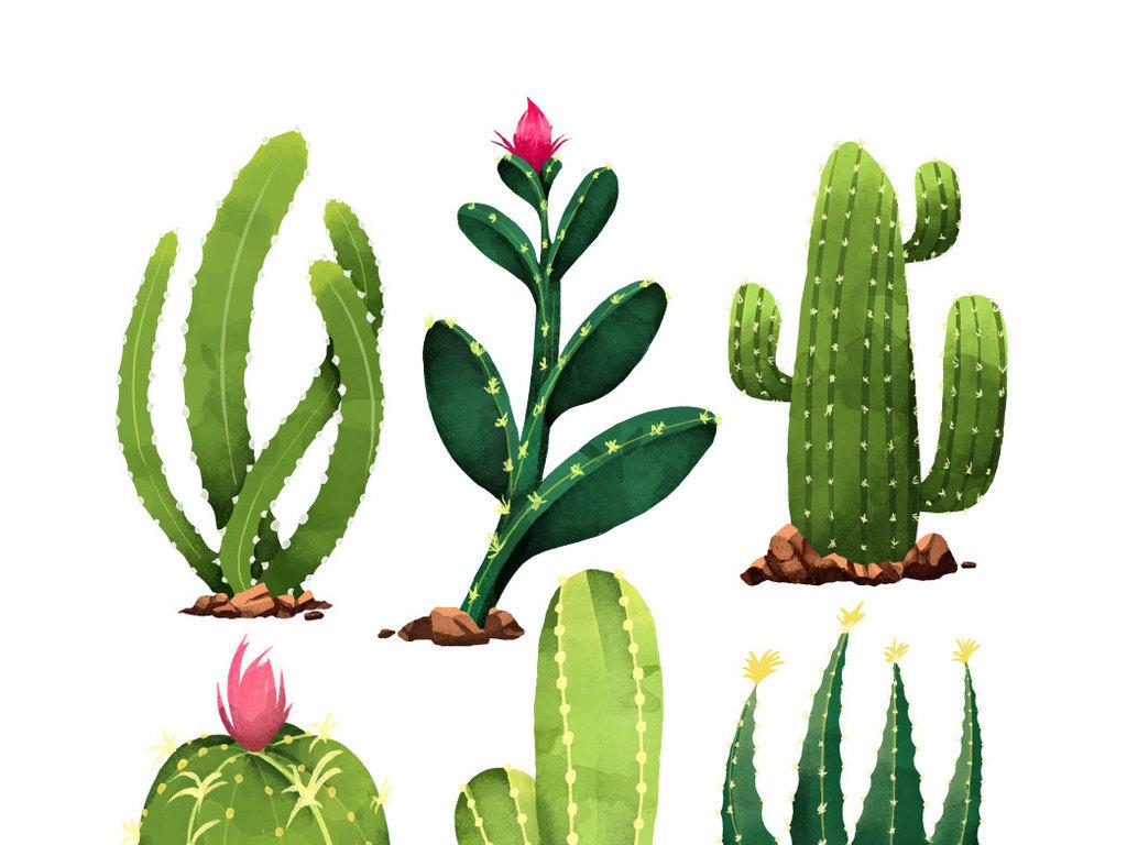 2018水彩手绘沙漠植物仙人掌