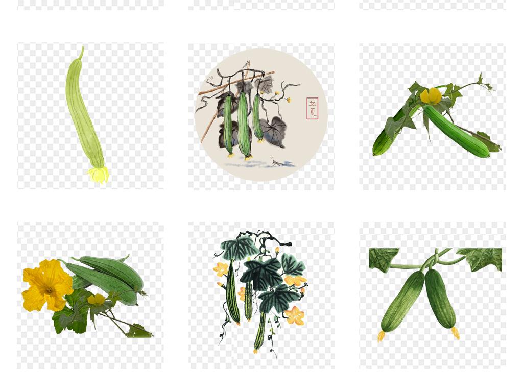 瓜果黄花营养农产品手绘