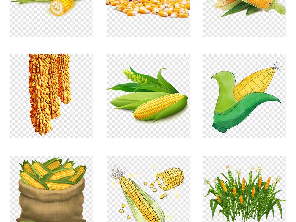 卡通手绘黄色玉米苞谷玉米农作物png素材