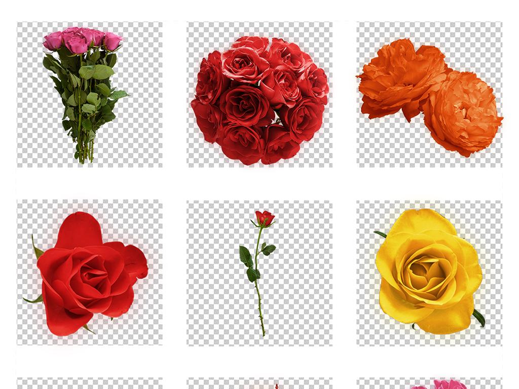 手绘红色月季玫瑰素材花朵免抠素材花束大图情人节素材高清大图花朵