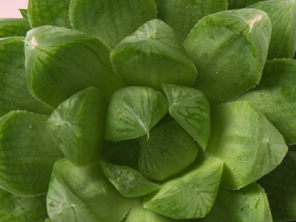 ins北欧风格手绘绿色植物多肉现代简约装饰画
