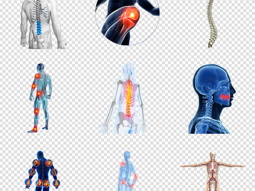人体内部结构分布图脊椎关节png免抠素材