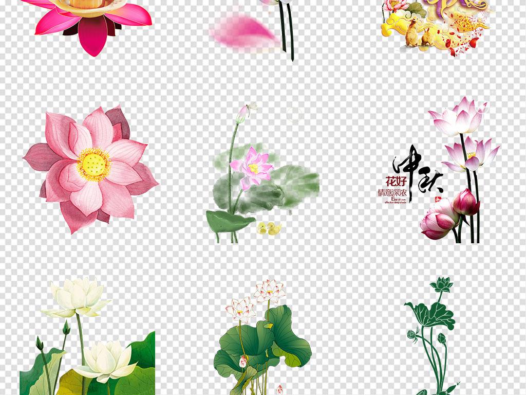 莲花莲子古风手绘荷花荷叶