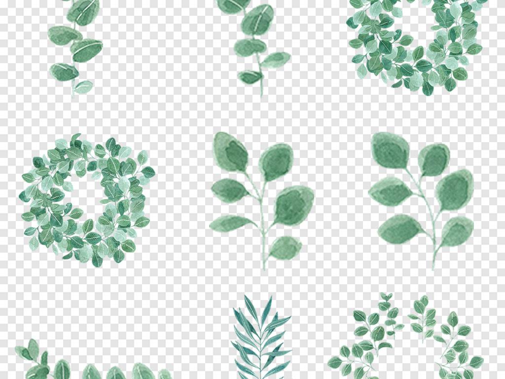 叶子                                          植物手绘