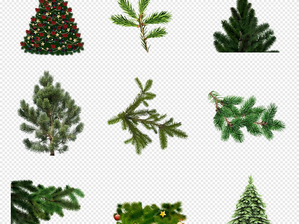 手绘插画素材杉树树木png透明背景透明背景花草花草背景png背景背景设