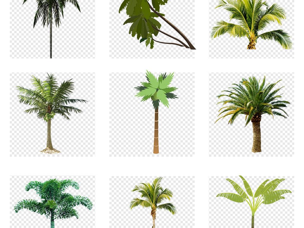 卡通手绘树木椰子树棕榈树沙滩树芭蕉夏天旅行海