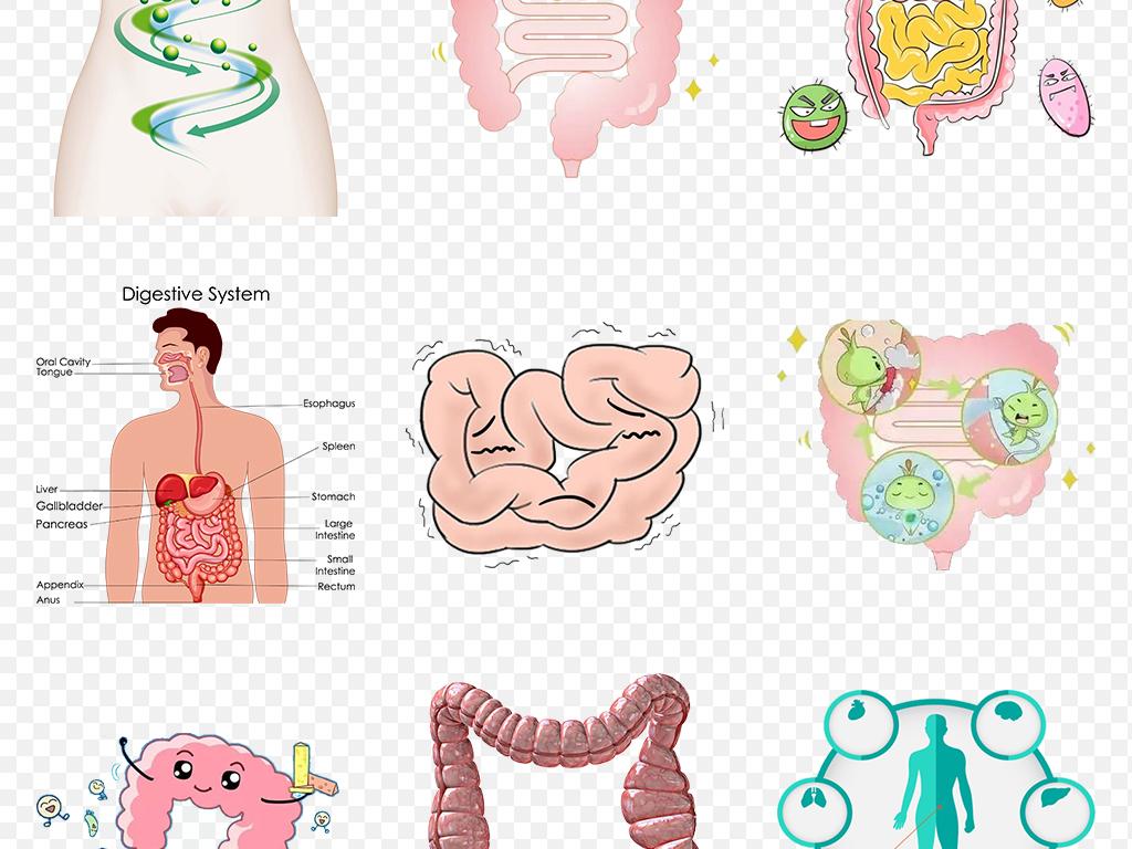 卡通手绘肠道肠胃消化系统海报素材背景图片png