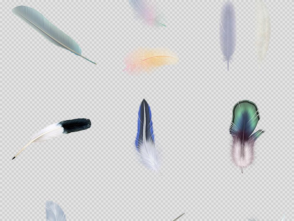 画羽毛花纹鸟羽毛动物羽毛水彩羽毛水彩手绘素材鸽子羽毛素材动物白色