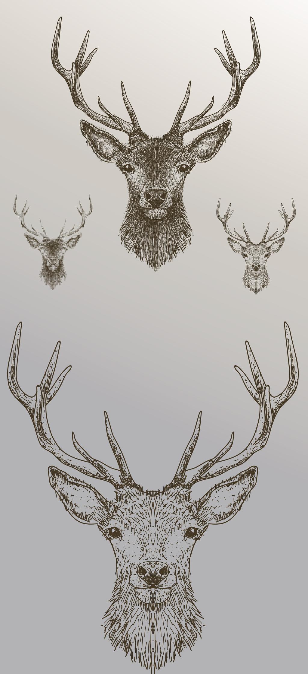 鹿手绘铅笔画设计元素                                    麋鹿