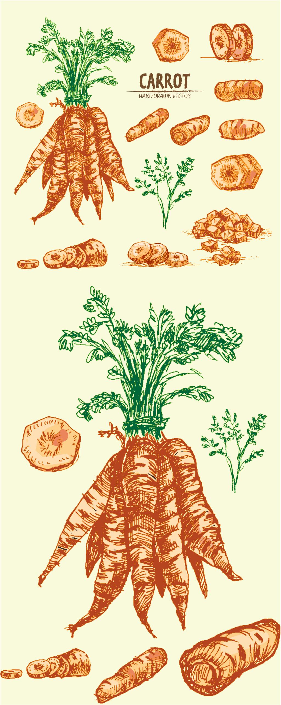 创意萝卜手绘矢量插画