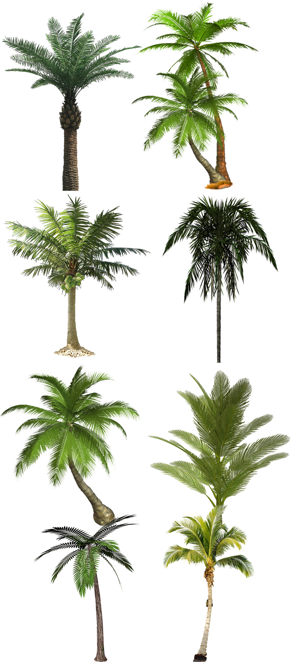 ps椰子树素材                                    手绘