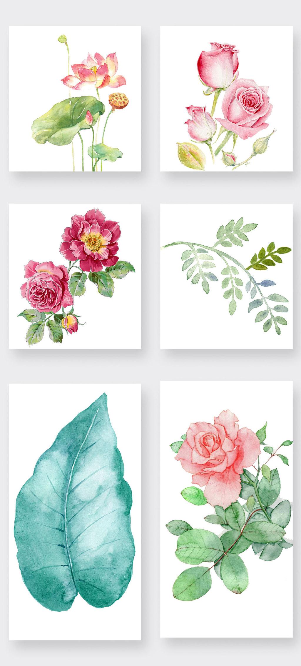 水彩玫瑰花荷叶png透明素材