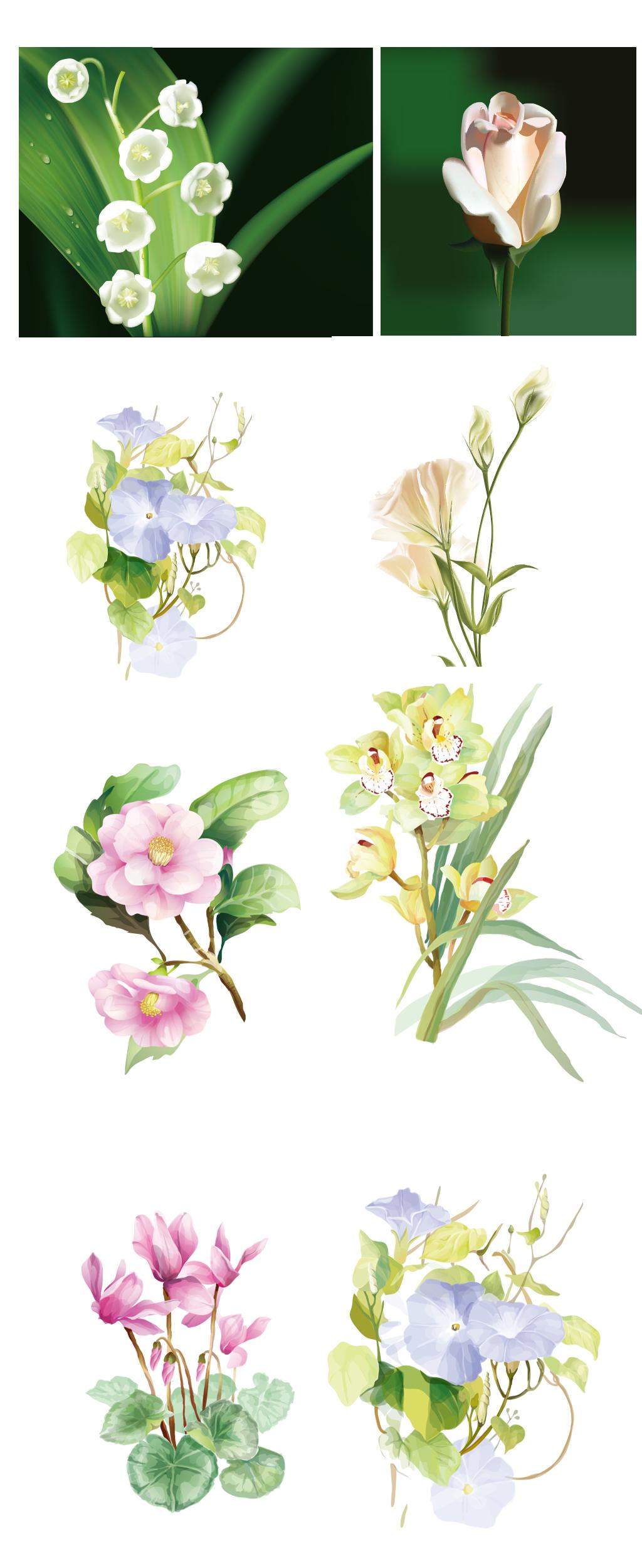 唯美手绘花卉图片设计素材_高清ai模板下载(2.33mb)qq