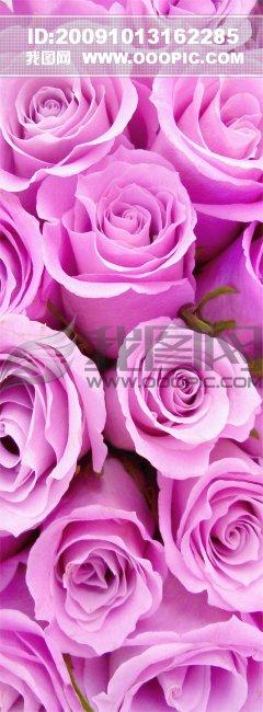 微信养眼风景头像 玫瑰花