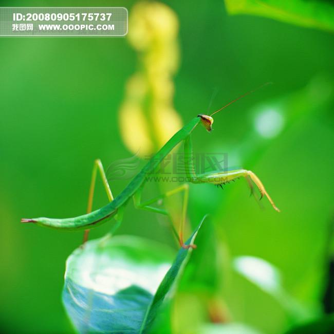 昆虫特写 蜻蜓 蝴蝶 青蛙 动物世界
