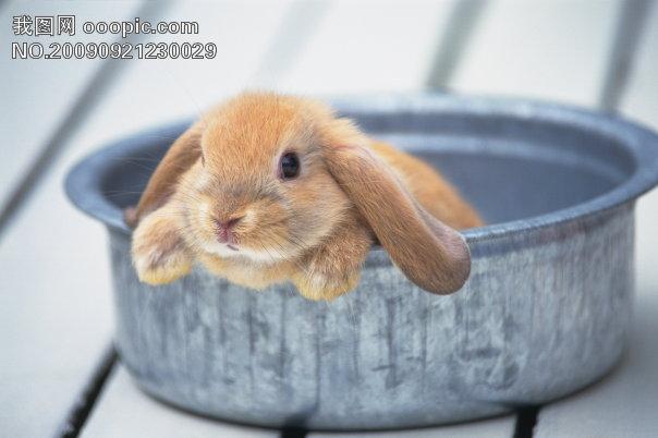小动物宠物兔3模板下载 小动物宠物兔3图片下载