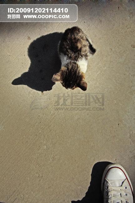 孤单寂寞的动物图片